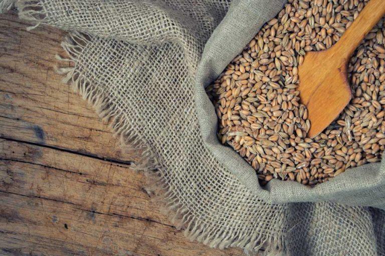 Iz česa je viski-slika žita